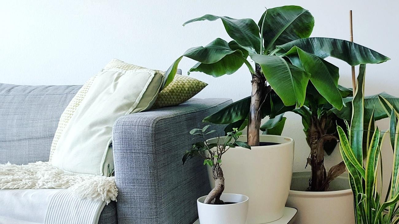 Green Lifestyle: Ideen und Inspiration für einen nachhaltigen Lebensstil